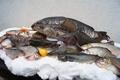 Havelberger Fische