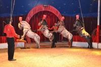 Circus-Show-Robini