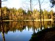 Teich mit B�umen am Ufer, die sich im Wasser spiegeln