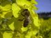 Bienenlehrgarten