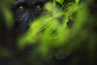 Ausstellung Glanzlichter der Naturfotografie