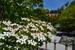 Gartenträume Rundgang 2015 - Japangarten